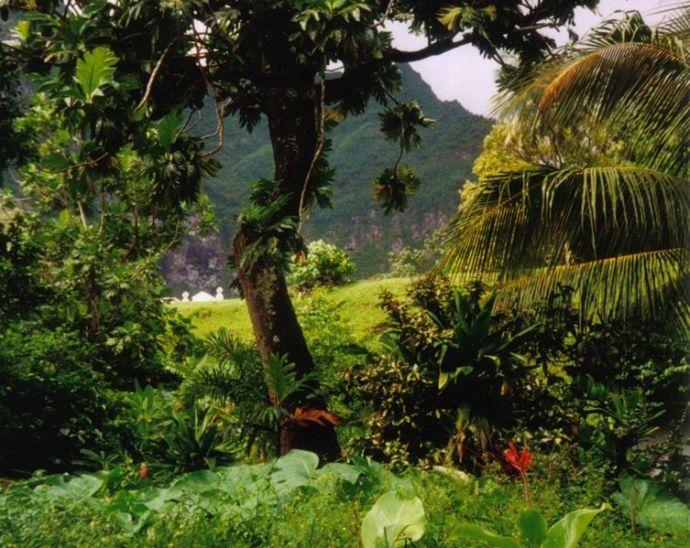 753px-Rainforest_Fatu_Hiva